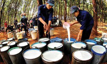 Hiểu doanh nghiệp Việt Nam – PHR